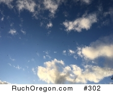40+ Turkey Vultures Flying - Ruch, Oregon  by kennygadams