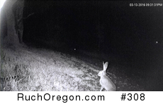Fox Stalking Rabbit - Ruch, Oregon  by kennygadams