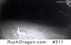 Unidentified Rabbit - Ruch, Oregon  by kennygadams