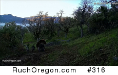 Wild Tom Turkey Traveling With His Harem - Ruch, Oregon  by kennygadams